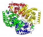 پاورپوینت کامل و جامع با عنوان بررسی لاکتات دهیدروژناز در 20 اسلاید