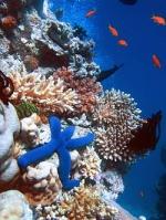 پاورپوینت کامل و جامع با عنوان بررسی صخره های مرجانی در 22 اسلاید