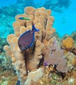 پاورپوینت کامل و جامع با عنوان مرجان ها، انواع و ساختار آن ها در 60 اسلاید